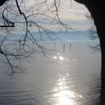 Baum-mit-See