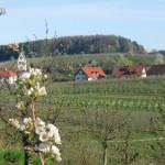 Gattnauer-Halde