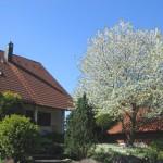 Haus-Hiemer-mit-Kirsche